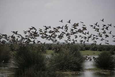 Deltada kuşlar (Fotoğraf: Samsun İl Kültür ve Turizm Müdürlüğü arşivi)