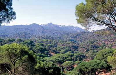 Aydın Beşparmak Dağları, Latmos Kaya Resimleri